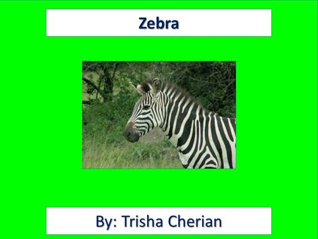 Zebra By: Trisha Cherian. Animal Facts Description Zebras have black and white stripes. Their height is 4 to 5 feet at the shoulder. They can weigh up.