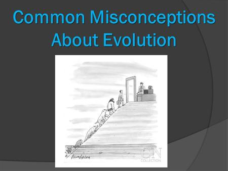 Common Misconceptions About Evolution. #1: Isn't evolution just a theory that even scientists can't agree on?