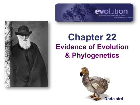 Chapter 22 Evidence of Evolution & Phylogenetics Dodo bird.