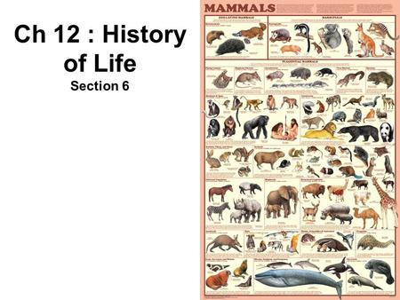 Ch 12 : History of Life Section 6. 12. Primates Mammals with flexible hands and feet Highest developed cerebrum Forward facing eyes – Binocular Vision.