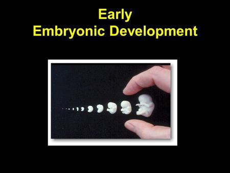 Early Embryonic Development. Glossary of Functional Terms Embryo – an organism in its early stages of development Fetus – human embryo after eight weeks.