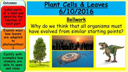 Plant Cells & Leaves 4/28/2017 Bellwork