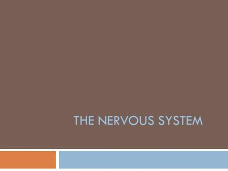 THE NERVOUS SYSTEM. Senses  In order for humans to survive, their bodies must constantly monitor the environment  Sense organs interact with the nervous.