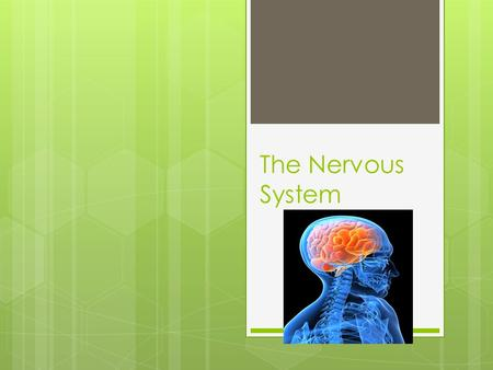 The Nervous System. Reacting to Stimuli  In order to maintain homeostasis and survive your body has to be able to react to changes in the environment.