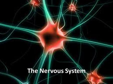 The Nervous System. Communication Center Central Nervous System (CNS): system of nerves, the spinal cord, and the brain that receives signals from environment.