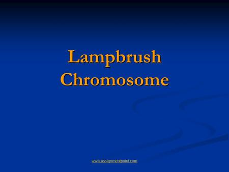 Lampbrush Chromosome www.assignmentpoint.com. Lampbrush Chromosome It was given this name because it is similar in appearance to the brushes used to clean.