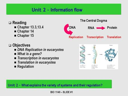 BIO 1140 – SLIDE #1 Unit 2 – Information flow Unit 2 – What explains the variety of systems and their regulation? DNA RNA Protein The Central Dogma Replication.