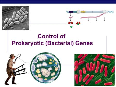 AP Biology 2007-2008 Control of Prokaryotic (Bacterial) Genes.