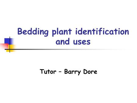 Bedding plant identification and uses Tutor – Barry Dore.