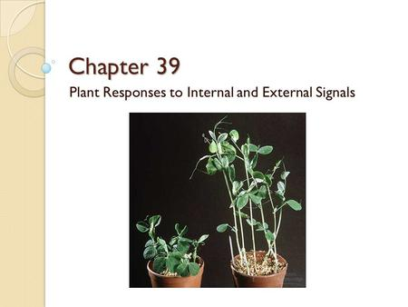 Chapter 39 Plant Responses to Internal and External Signals.