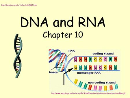 DNA and RNA Chapter 10