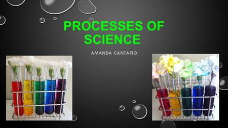 PROCESSES OF SCIENCE AMANDA CANTAFIO. OBSERVING OBSERVING WHILE USING ALL THE SENSES TO FIND THE DIFFERENT ELEMENTS OF THE OBJECT BEING OBSERVED. OBSERVING.