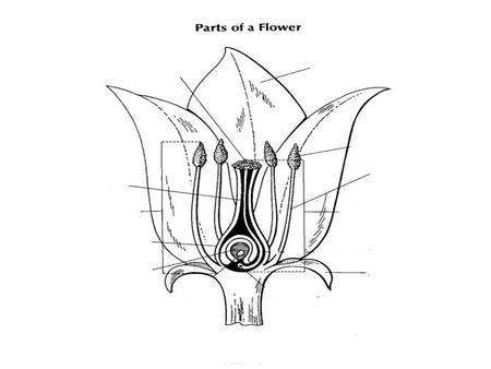 Petal Attracts insects and birds to the plant. Stalk Brings nutrients from the soil to the flower. Holds up the flower.