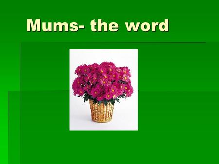 Mums- the word. There are over 160 species of chrysanthemums. One of the most popular is Chrysanthemum morifolium, or florist chrysanthemum.
