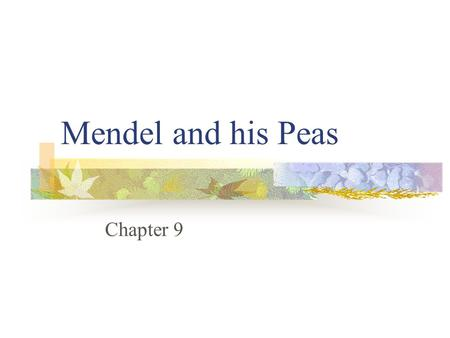 Mendel and his Peas Chapter 9. State Objectives CLE 3210.4.5 Recognize how meiosis and sexual reproduction contribute to genetic variation in a population.