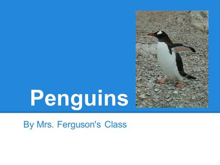 Penguins By Mrs. Ferguson's Class. kyilee Penguins are all black in white. And they cannot fly. There is a possible chance that they can bite but I don't.