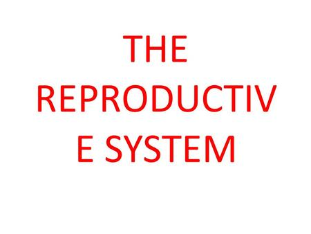 THE REPRODUCTIV E SYSTEM. Functional anatomy, physiology and investigations In the male, the testis subserves two principal functions: 1.synthesis of.