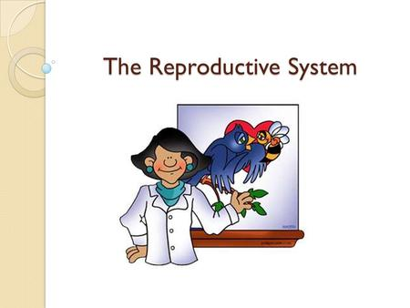 The Reproductive System. Male Reproductive System.