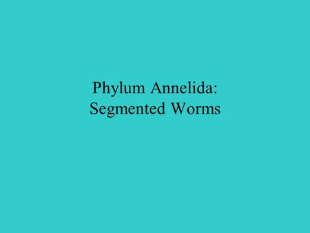 Phylum Annelida: Segmented Worms. Section 27.2 Summary – pages 728-733 Segmented worms are classified in the phylum Annelida. They include leeches and.