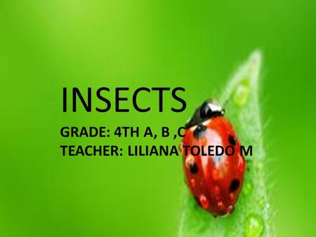 INSECTS GRADE: 4TH A, B,C TEACHER: LILIANA TOLEDO M.