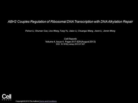 ABH2 Couples Regulation of Ribosomal DNA Transcription with DNA Alkylation Repair Pishun Li, Shuman Gao, Lina Wang, Fang Yu, Jialun Li, Chuangui Wang,