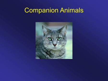 Companion Animals. 60% of households in the U.S. have a pet.