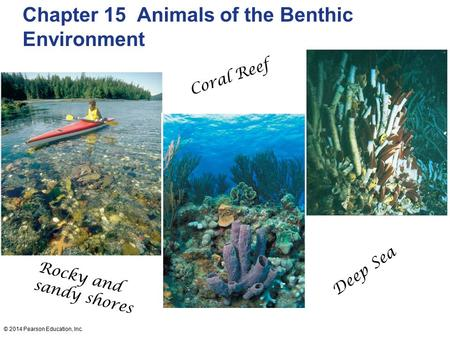© 2014 Pearson Education, Inc. Chapter 15 Animals of the Benthic Environment Rocky and sandy shores Coral Reef Deep Sea.
