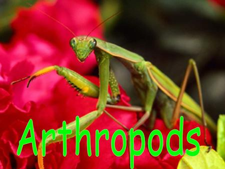 An arthropod is an invertebrate with an exoskeleton, a segmented body, and jointed legs.