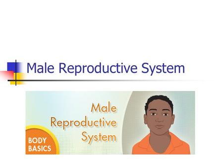 Male Reproductive System. Male Hormone Testosterone - Hormone that produces male secondary sex characteristics. Both physical and emotional changes.