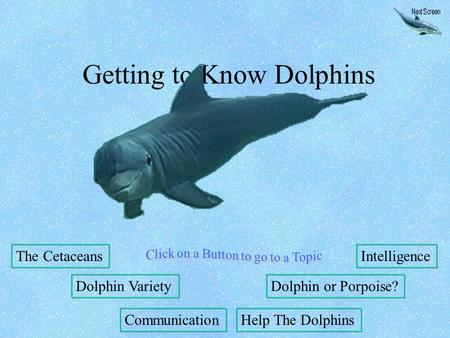Getting to Know Dolphins The Cetaceans Dolphin Variety Communication Intelligence Dolphin or Porpoise? Help The Dolphins.