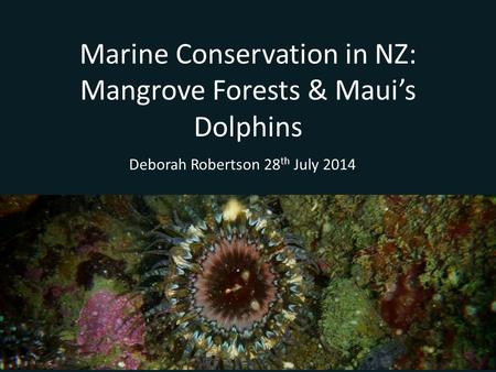 Marine Conservation in NZ: Mangrove Forests & Maui's Dolphins Deborah Robertson 28 th July 2014.