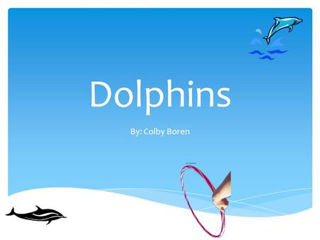 Dolphins By: Colby Boren. Table of Contents Oceanic Dolphins (and various species) River Dolphins (and various species) Bibliography Dolphin Facts Dolphins.