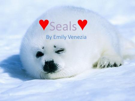 ♥ Seals ♥ By Emily Venezia Habitat/Food Description Seals usually weigh around 1,000 pounds or less it depends what type of Seal they are Seals can.