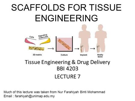 SCAFFOLDS FOR TISSUE ENGINEERING ENGINEERING Tissue Engineering & Drug Delivery BBI 4203 LECTURE 7 Much of this lecture was taken from Nur Farahiyah Binti.