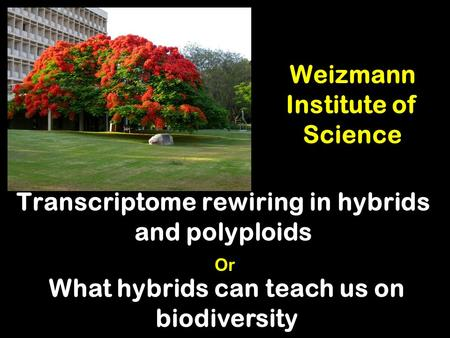Weizmann Institute of Science Transcriptome rewiring in hybrids and polyploids What hybrids can teach us on biodiversity Or.