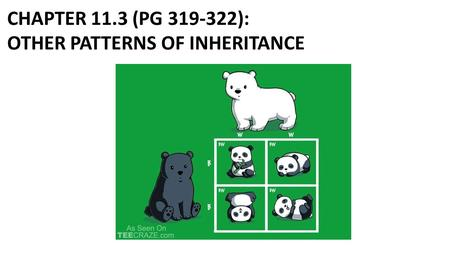 CHAPTER 11.3 (PG 319-322): OTHER PATTERNS OF INHERITANCE.