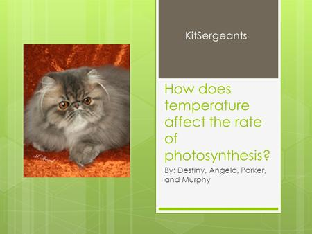 How does temperature affect the rate of photosynthesis? By: Destiny, Angela, Parker, and Murphy KitSergeants.