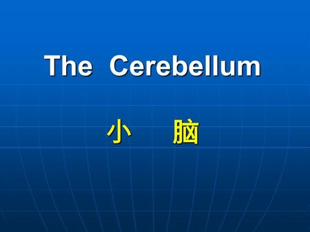The Cerebellum 小 脑 The Cerebellum 小 脑. lies above and behind the medulla oblongata and pons; occupies posterior cranial fossa Cerebellum Position:
