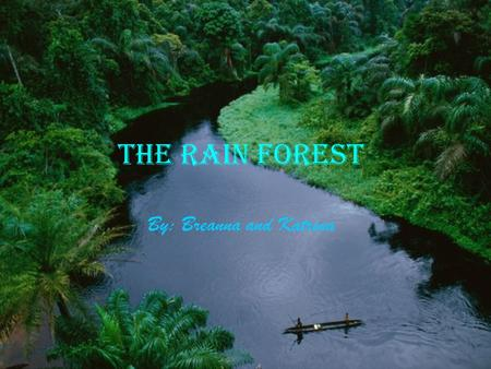 The Rain Forest By: Breanna and Katrina. What is a rain forest? A rain forest is a place where half of all the animals in the world live. There are also.