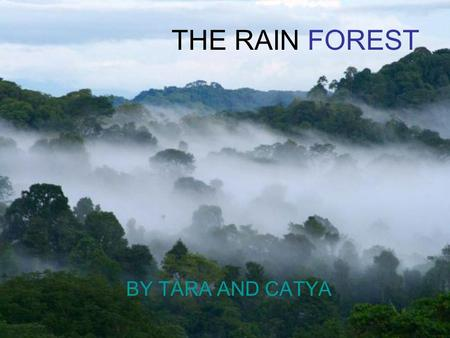 THE RAIN FOREST BY TARA AND CATYA. What is a rain forest? A rainforest is just what its name sounds like -a forest that gets rain almost every day. It.