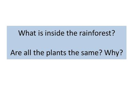 What is inside the rainforest? Are all the plants the same? Why?