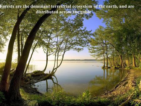 Forests are the dominant terrestrial ecosystem of the earth, and are distributed across the goble.