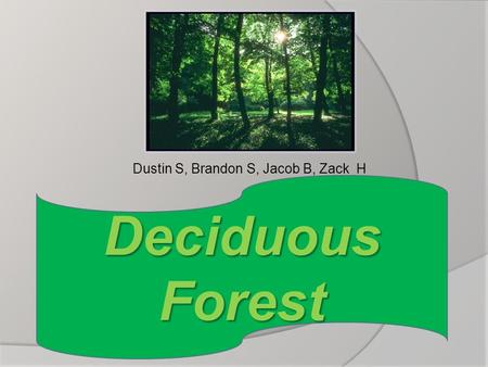 Dustin S, Brandon S, Jacob B, Zack H Deciduous Forest.