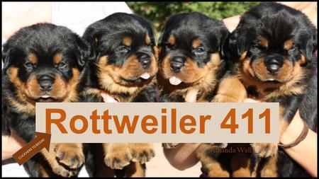 Amanda Wells Rottweiler 411 CLICK HERE TO BEGIN!.