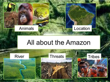 All about the Amazon Animals Location RiverThreats Tribes.