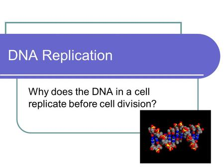 DNA Replication Why does the DNA in a cell replicate before cell division?