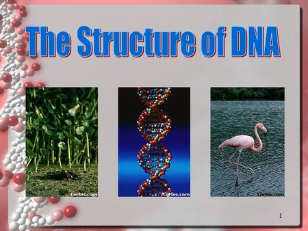 1 2 DNA Why do we study DNA? We study DNA for many reasons: its central importance to all life on Earth because it codes for all PROTEINS medical benefits.