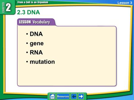 2.3 DNA DNA gene RNA mutation Lesson 3. What is DNA? Stands for deoxyribonucleic acid 2.1 The Cell Cycle and Cell Division Genetic material in the nucleus.