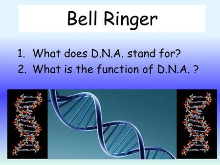 Bell Ringer 1.What does D.N.A. stand for? 2.What is the function of D.N.A. ?