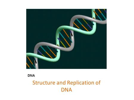 DNA Structure and Replication of DNA. Chromosomes.
